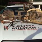 Policia Militar e Civil realizam operação conjunta e apreendem armas de fogo e animais da fauna silvestre brasileira.