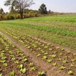 Emater-MG é eleita a melhor empresa de desenvolvimento agropecuário do país
