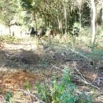 Motorista de retroescavadeira morre em acidente em Carangola