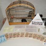 PM apreende munição, pássaro e quase R$ 15 mil em residência de Fervedouro.
