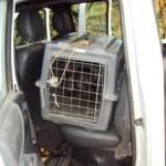 PM do Meio Ambiente solta filhotes de cachorro do mato em reserva da região.