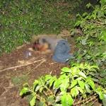 Homem é executado a tiros na zona rural de Divino.