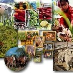 Agenda estratégica da Agricultura.
