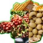 Agricultura Familiar comercializa produtos em feira livre na Cidade Administrativa.
