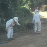 Produtores rurais são atacados por abelhas e um vai parar no hospital.
