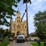 Governo de Manhuaçu promove poda das palmeiras de praças.