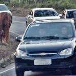 Porque tem animal solto em vias públicas?