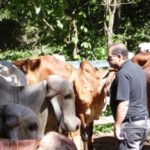 Fazendas do BASA recebem  visita de Consultor de Desenvolvimento Agropecuário do Nordeste.