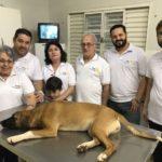 """Rotary Club de Carangola realiza projeto """"Castração por amor""""."""