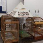 PM de S.Francisco do Gloria recupera moto furtada, apreende pássaros silvestres e prende dois homens.