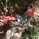 PM de Carangola recupera motocicleta que foi furtada na semana da Exposição.