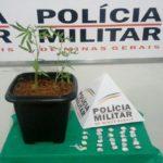Traficante de drogas é preso pela PM em Caiana (MG).