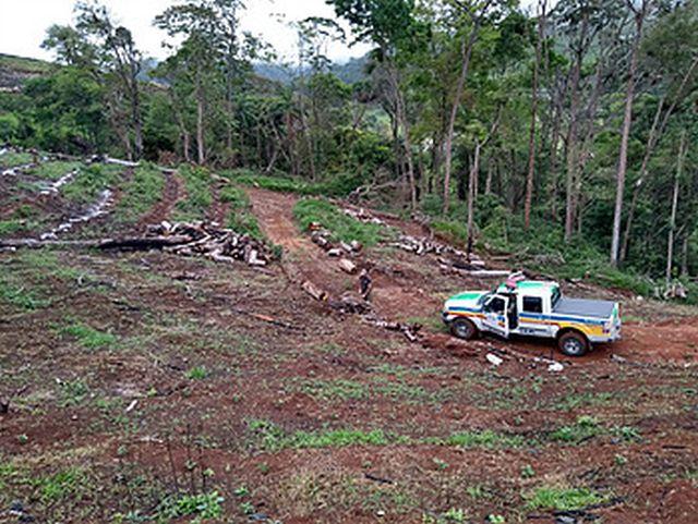 PM de Meio Ambiente de Carangola flagra desmatamento ilegal em Divino/MG.