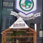 Cativeiro ilegal da fauna silvestre é descoberto pela Polícia Militar Ambiental.